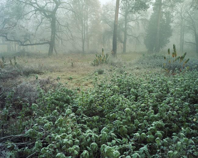 Eine Waldszene