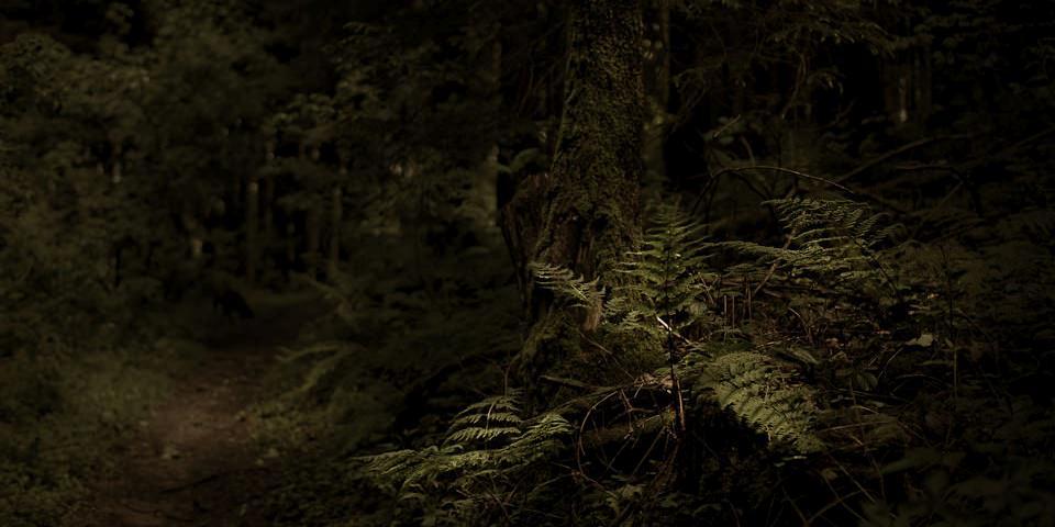 Farn wächst vor einem bemoosten Baum im Wald am Wegesrand.