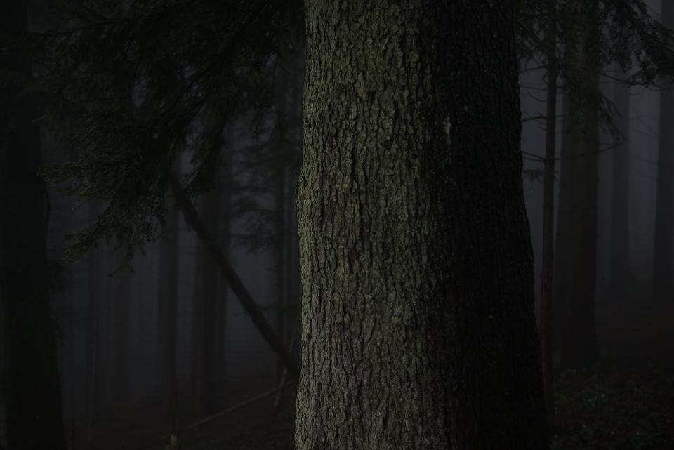 Baum in einem nebligen Wald, Rinde nah zu sehen.