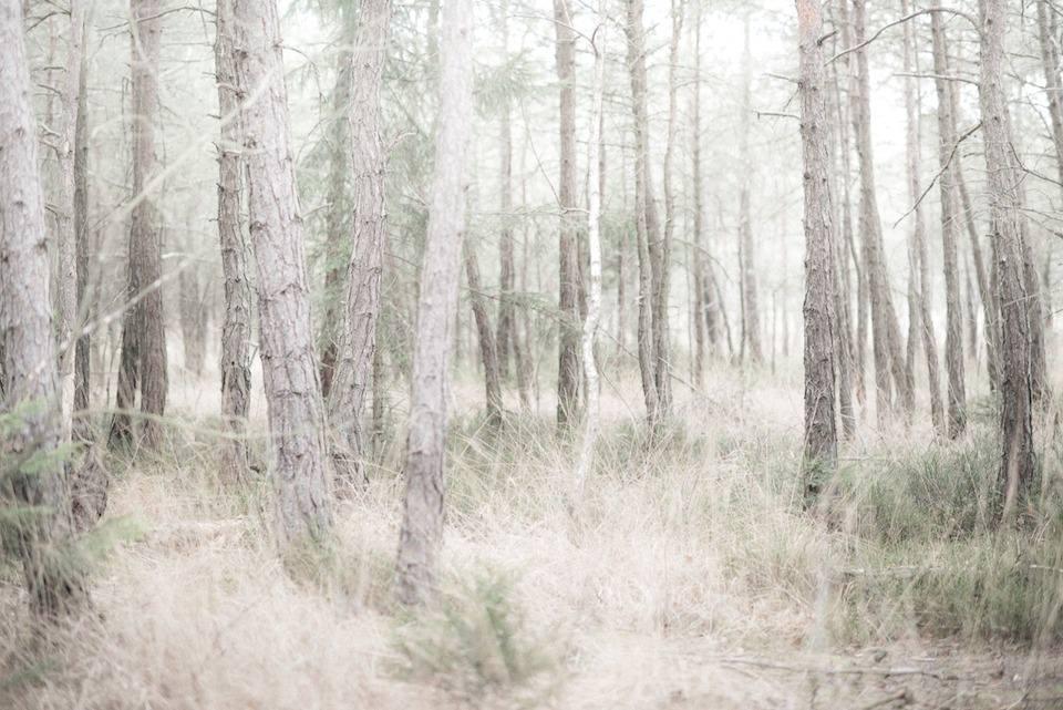 Gestrüpp wächst zwischen Bäumen im Wald.