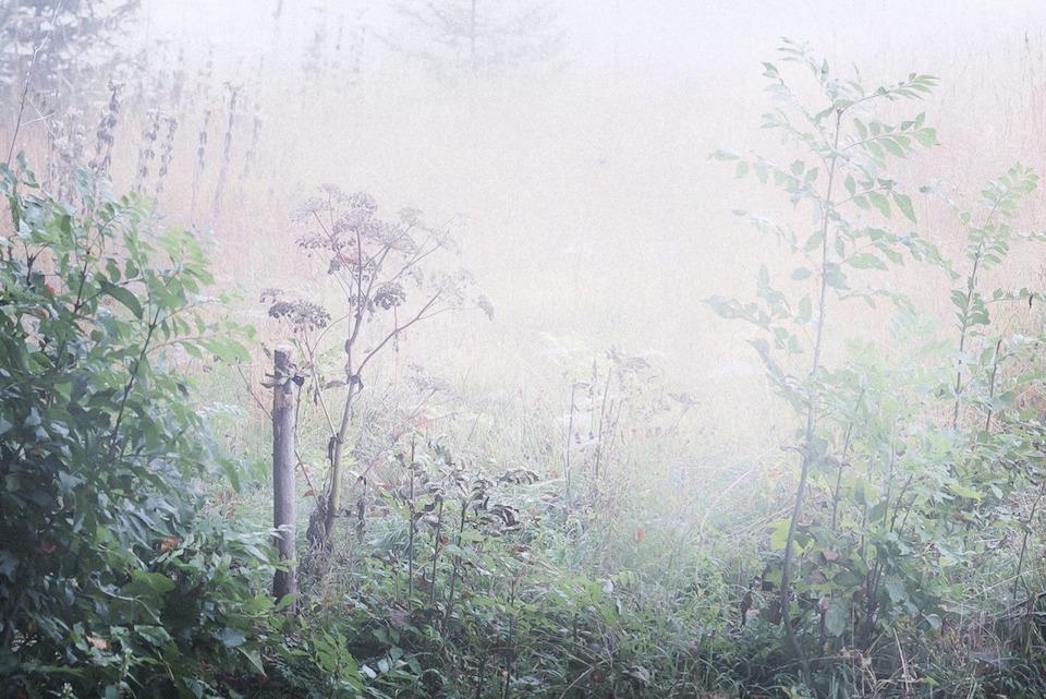 Eine wilde Wiese in Gegenlicht und Nebel.