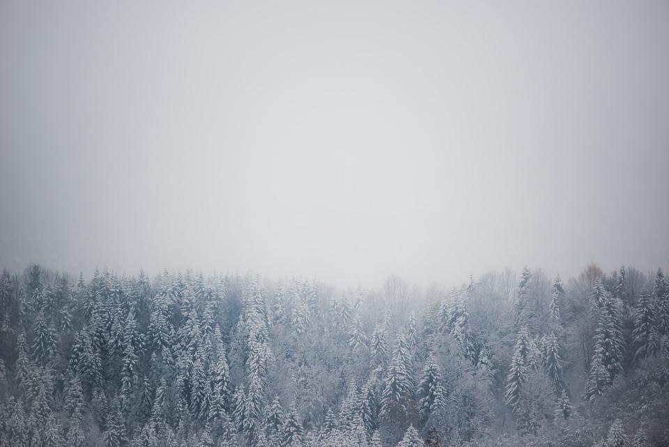 Verschneiter Tannenwald vor verhangenem Himmel.