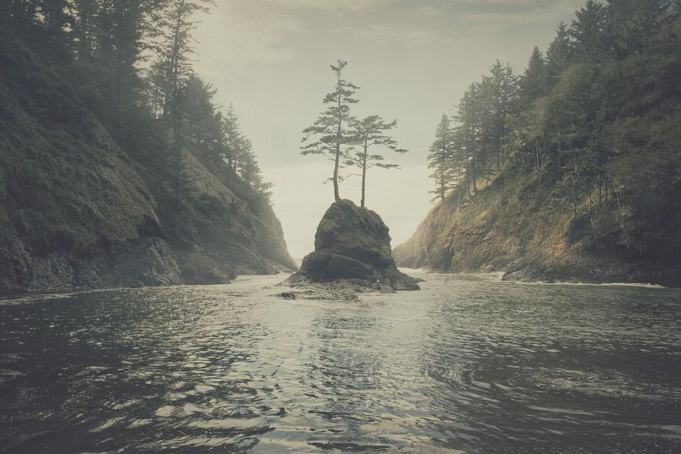 Zwei Bäume auf einem Felsen, der in einer Schlucht aus dem Wasser ragt.