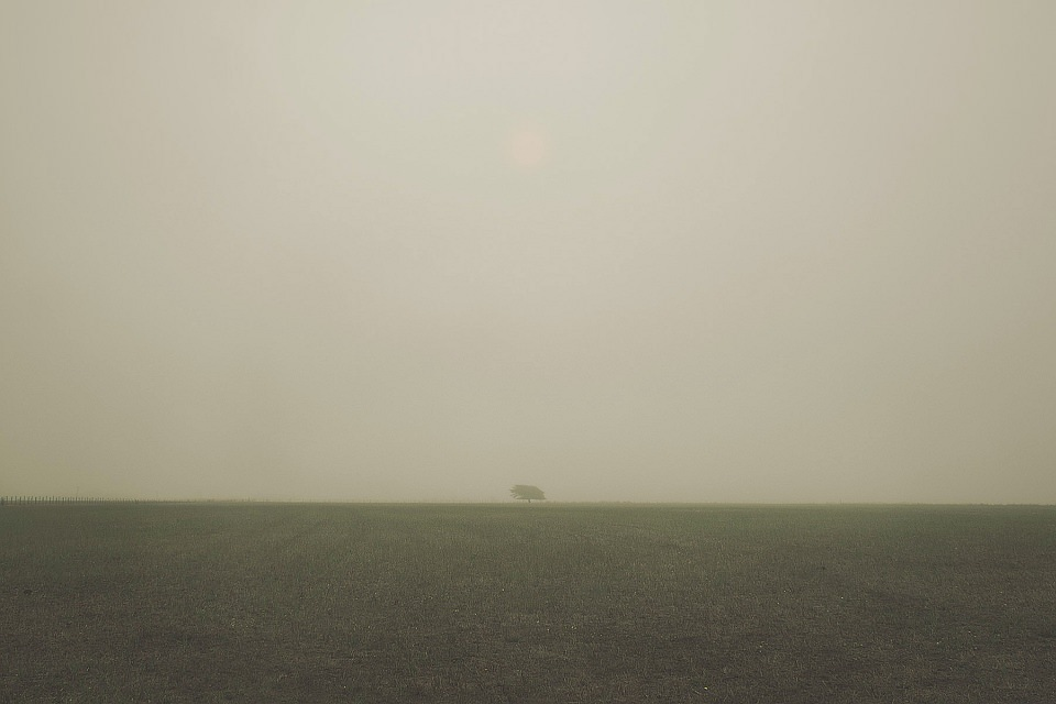 Karges Feld, an dessen Ende ein einzelner kleiner Baum steht.