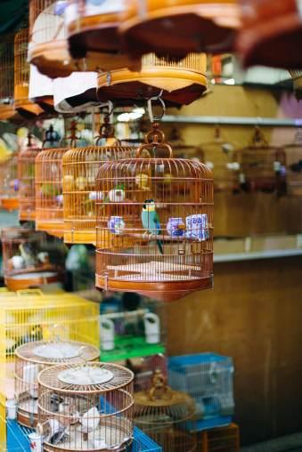 Vogelkäfige auf dem Markt