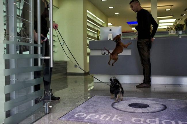 Ein Hund springt einen Mann an.