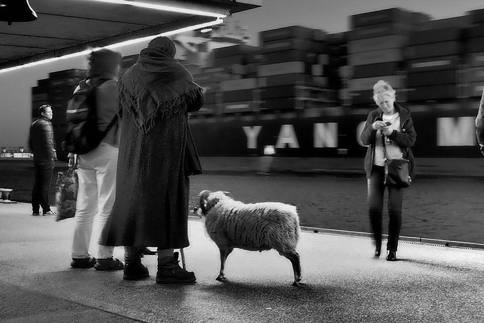 Sheepstop © Happy! Andrea