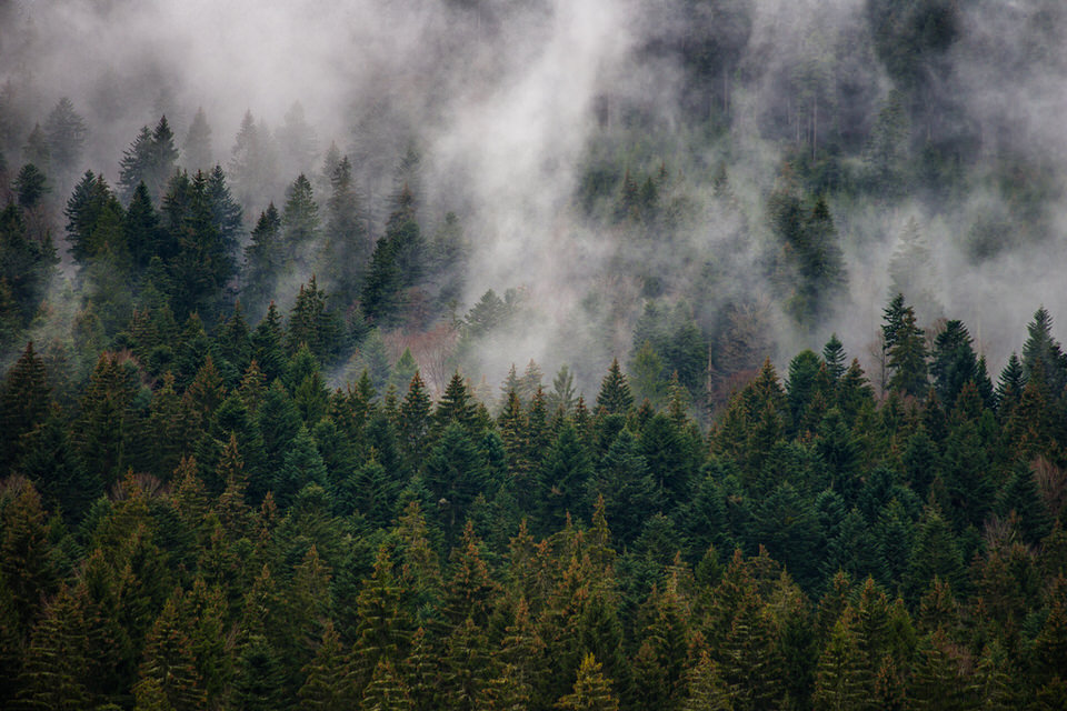 Heute im Ausblick: Schwarzwald im Nebel