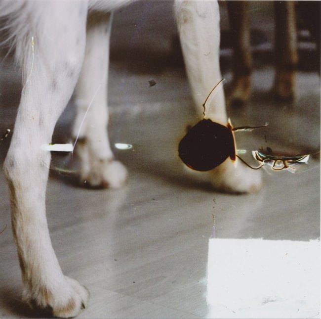 Hundebeine von hinten fotografiert und ein dunkles Loch in der Mitte.