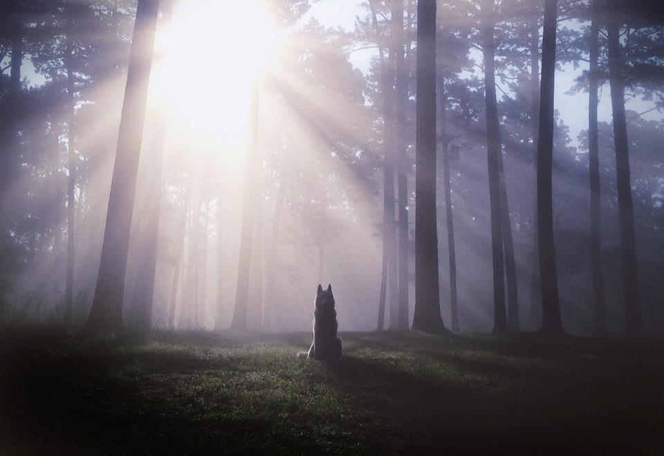 Hund sitzt im Wald. Durch die Baume bricht das Sonnenlicht.