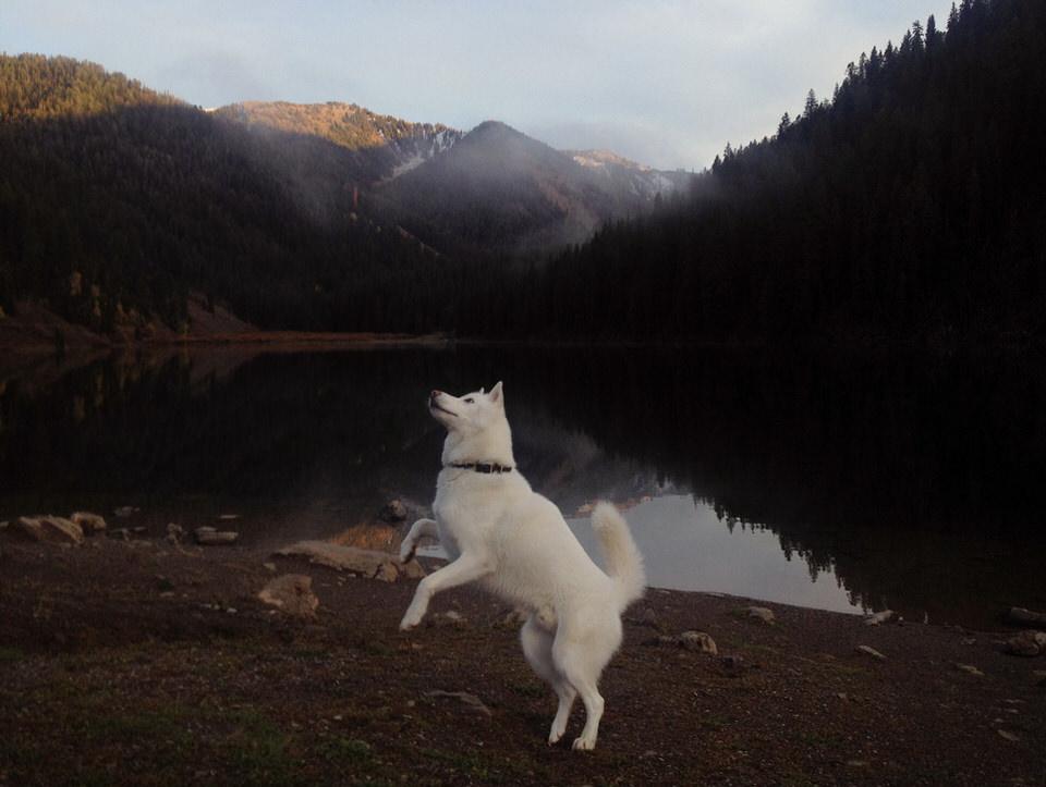 Ein Hund setzt zum Sprung an. Dahinter ein Waldsee.