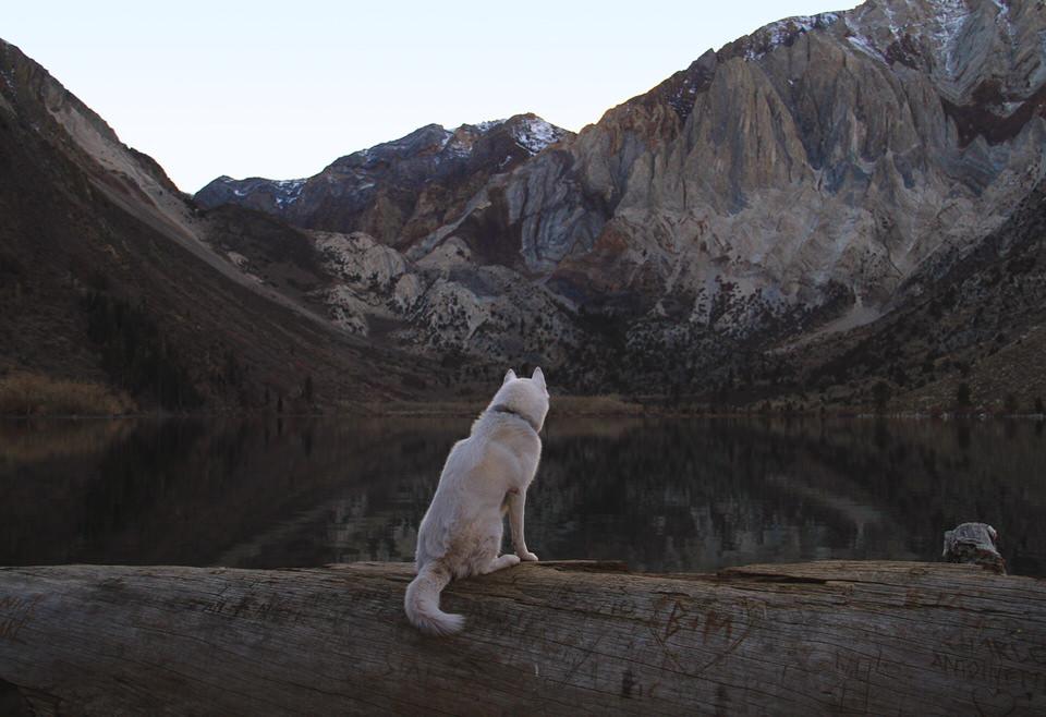 Hund sitzt auf einem Baumstamm und sieht in die Landschaft.