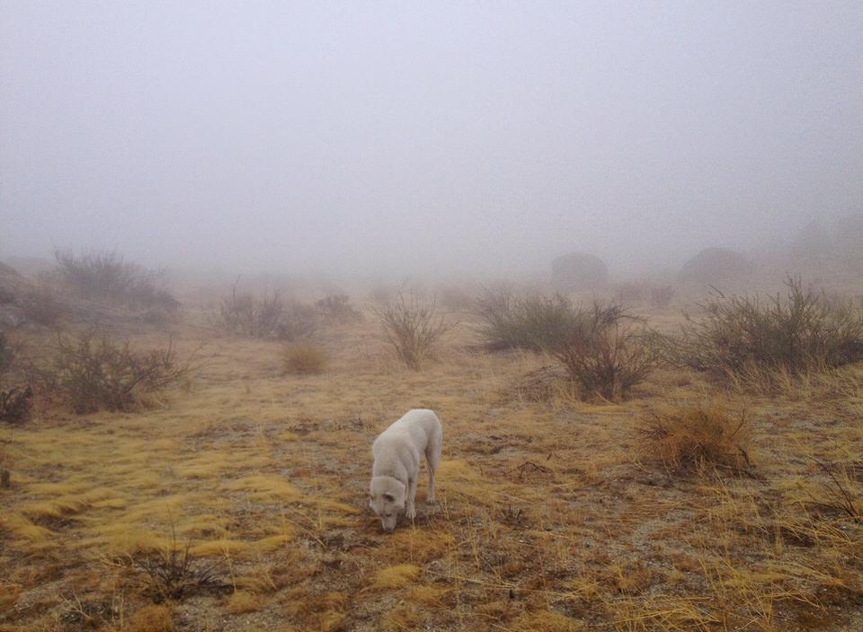 Hund auf einer gelben Wiese im Nebel.