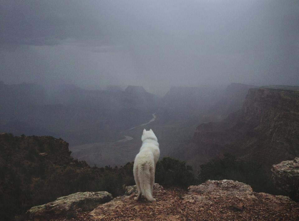 Hund steht auf einem Fels und sie in die Flusslandschaft hinunter.