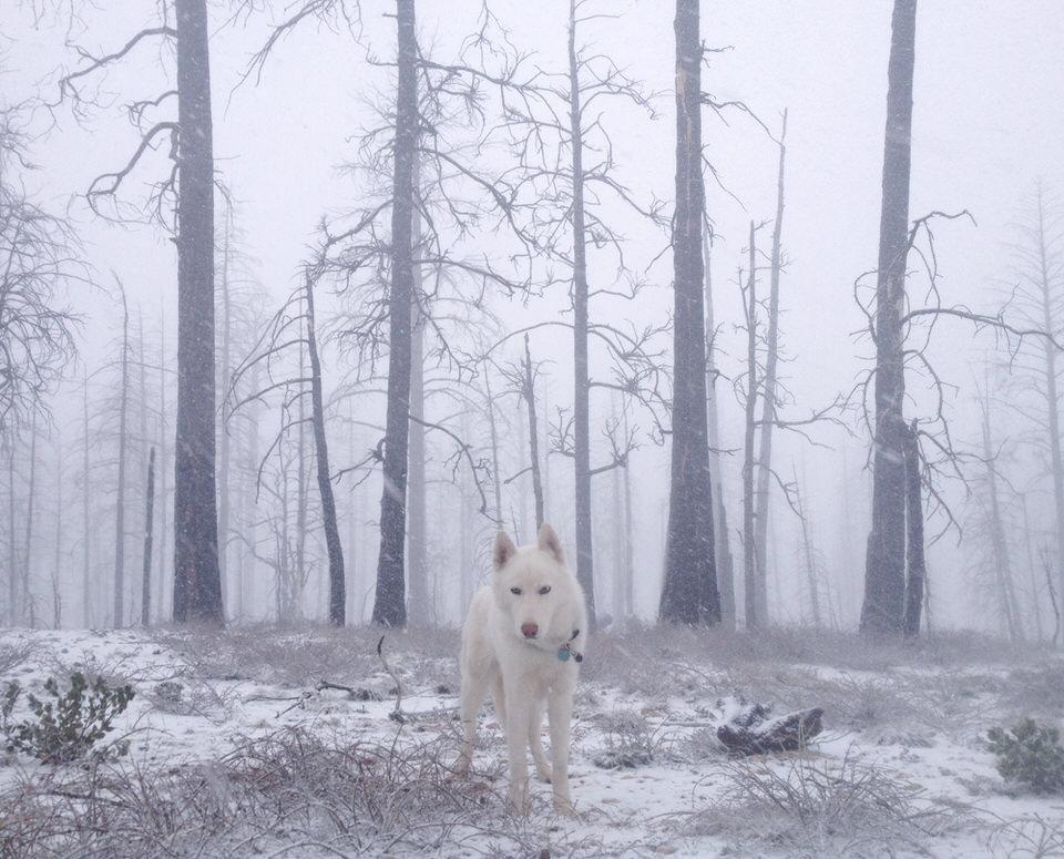 Hund in einem gefrorenen Wald.