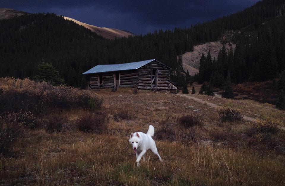Ein Hund rennt über eine Wiese. Im Hintergrund eine Holzhütte.