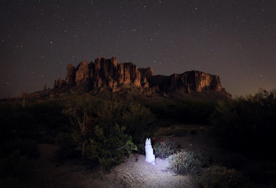 Hund sitzt in einem Lichtschein vor dem Sternenhimmel.