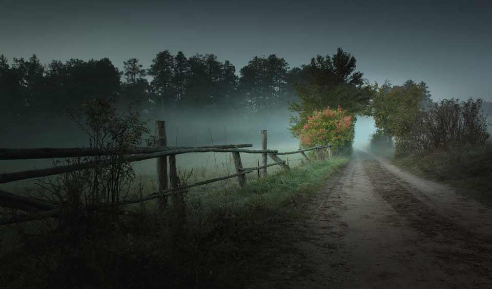 Ein Weg in den Wald an einer Wiese vorbei