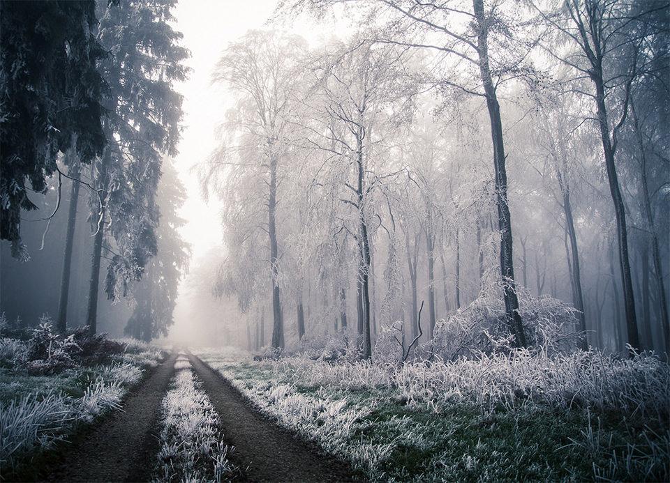 Wald voller Schnee und Frost mit Waldweg