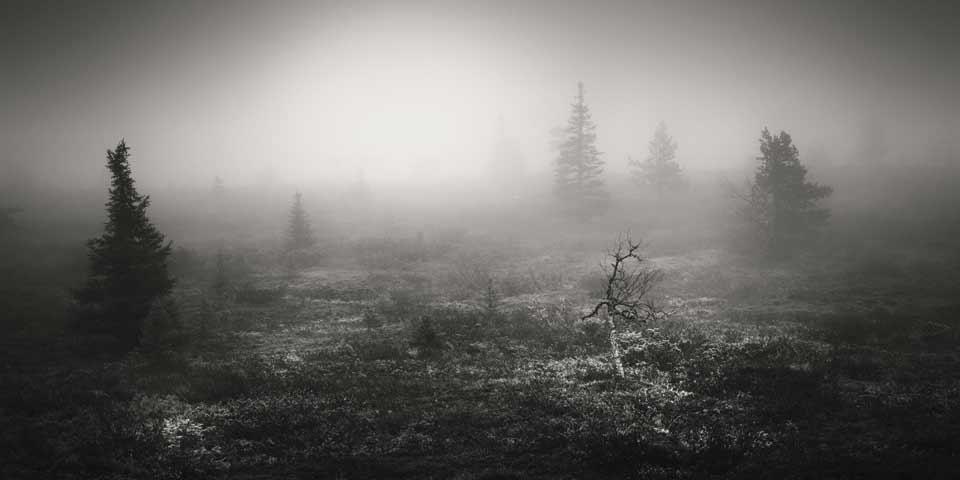 Eine karge Landschaft im Nebel