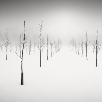 Walking Dead III © Vesa Pihanurmi