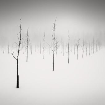 Walking Dead IV © Vesa Pihanurmi