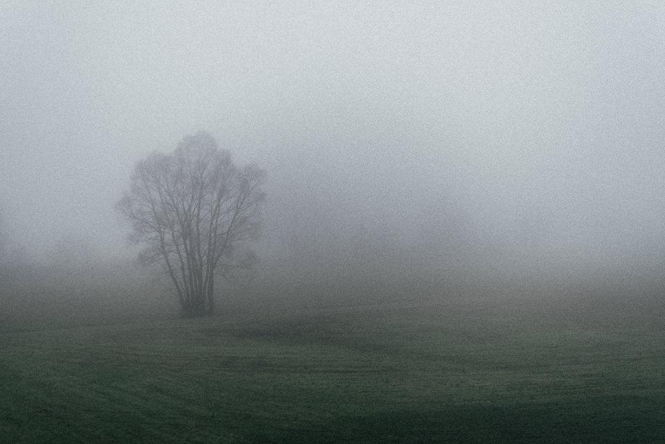 Ein Baum im Nebel