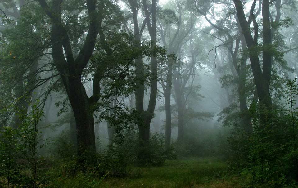 Ein grüner Wald