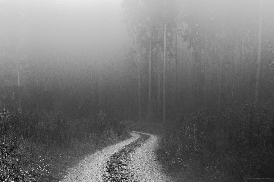 Weg, der in einen nebligen Wald führt.