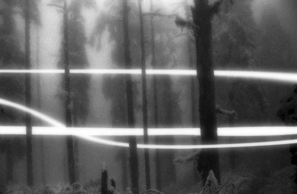 Seltsame Streifen im Wald?