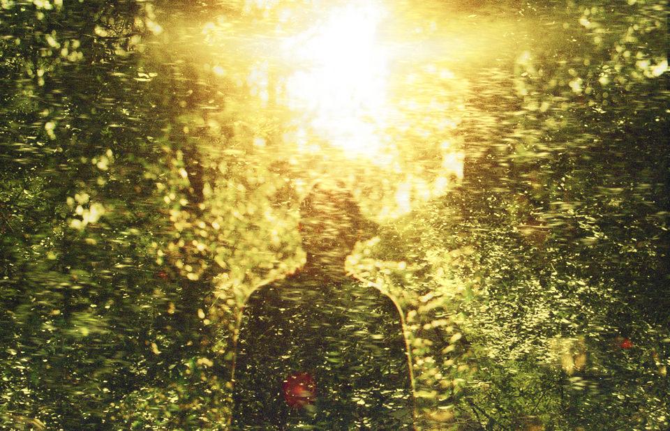 Ein güldener Wald und ein Schatten.