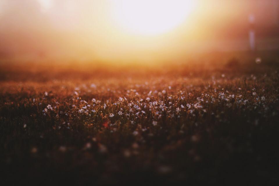 Gras im Morgenlicht.