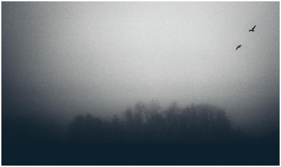 Bäume im Nebel und zwei Vögel.