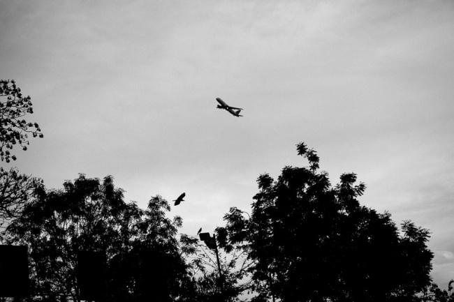Bäume, ein Flugzeug und ein Vogel.