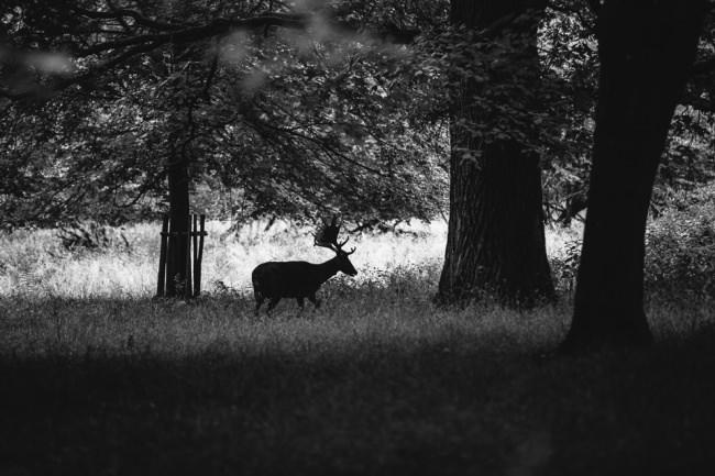 Ein Elch im Wald.