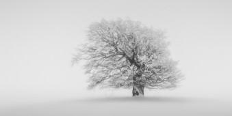 Ein einzelner Baum im Schnee.