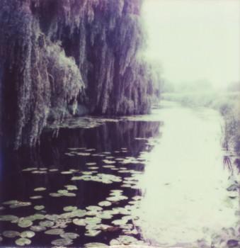 Fluss, auf dem Seerosen treiben und über dessen Ufer große Weiden hängen.