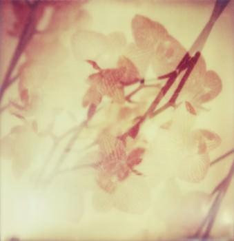 Doppelbelichtung mit Orchideenblüten.