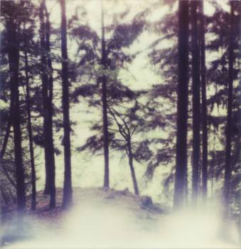 Nadelbäume an einem Abhang.
