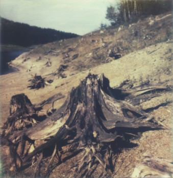 Toter Baumstamm am Ufer eines Sees.