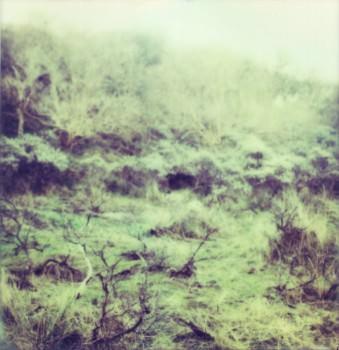 Grünes Gestrüpp an einer Düne.