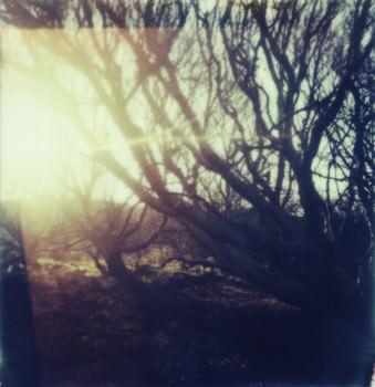 Eindrucksvoll verzweigte Bäume vor der blendenden Sonne kurz über dem Horizont.