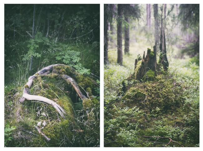 Diptychon zweier Baumstämme im Wald