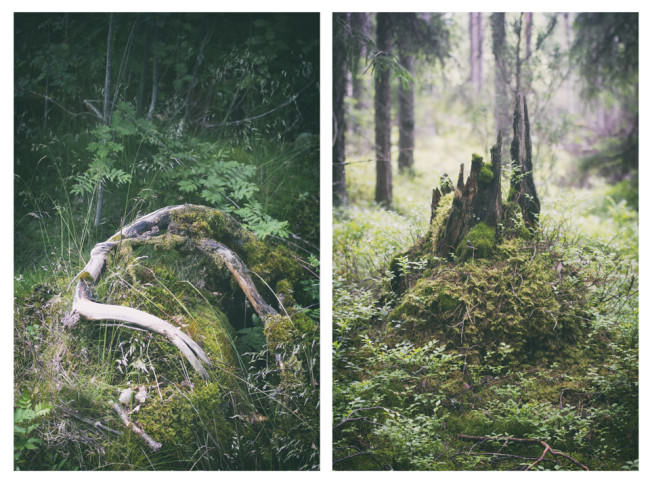 Diptychon Wald Moos Bäume