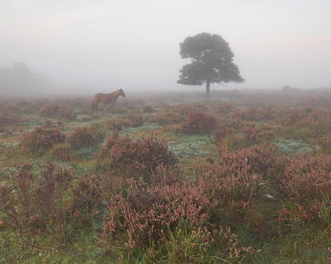Ein Pferd steht neben einem Baum auf einer nebligen Wiese.