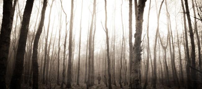 Bäume und die Silhuette einer Person