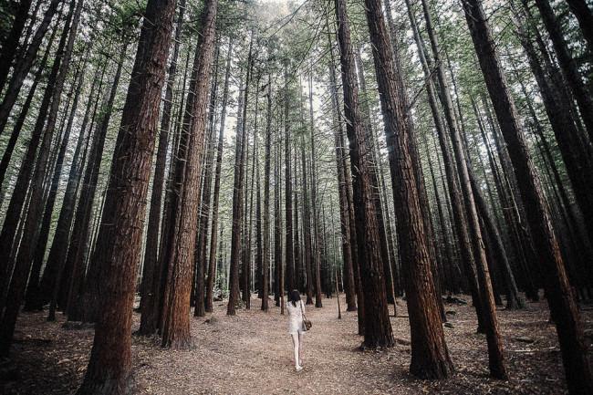 Eine Person im Wald
