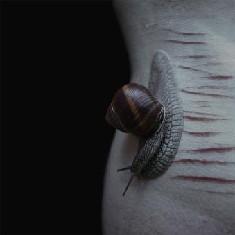 Eine Schnecke liegt auf Narben.