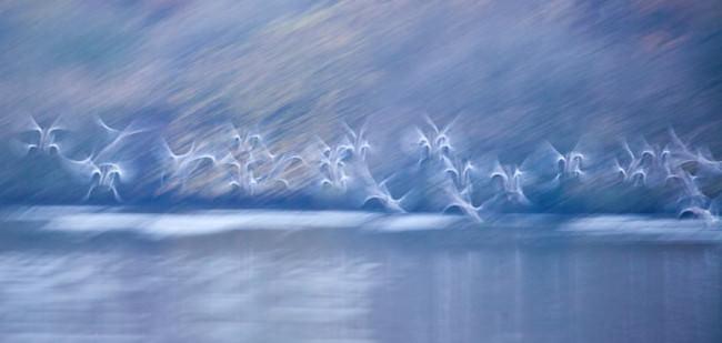 Langzeitbelichtung von fliegenden Vögeln über einer Wasserfläche.