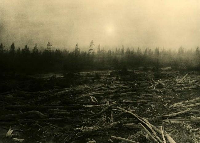 Eine Landschaft mit gefällten Bäumen